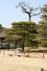 Hiroshima, Shukkeien, Japanese garden - Please click to download the original image file.